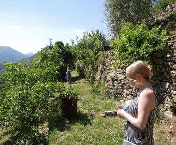 Небольшая частная ферма в окресностях Санремо_5